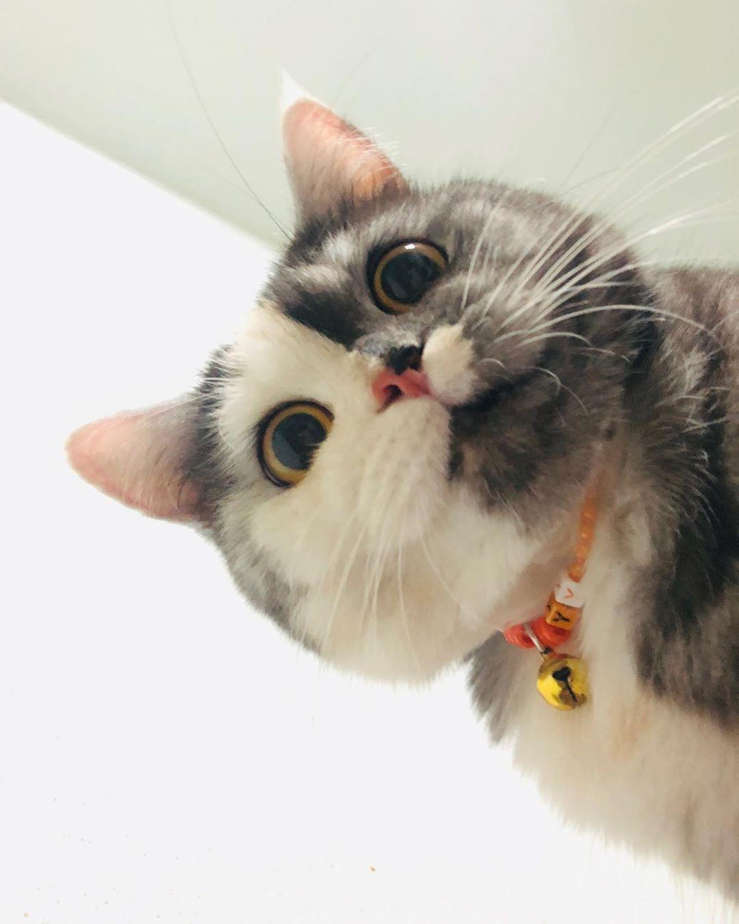 """เรามาอย่างเป็นมิตร! ทำความรู้จักกับ """"แมว"""" ที่มีชื่อว่า """"แมว"""" และลายค"""